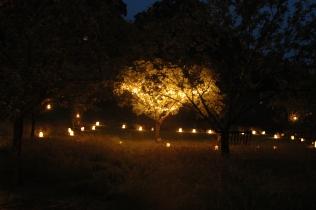 verdigris-tree-party-garden-lights