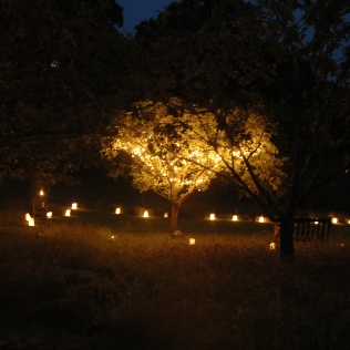 verdigris-tree-party-garden-lights